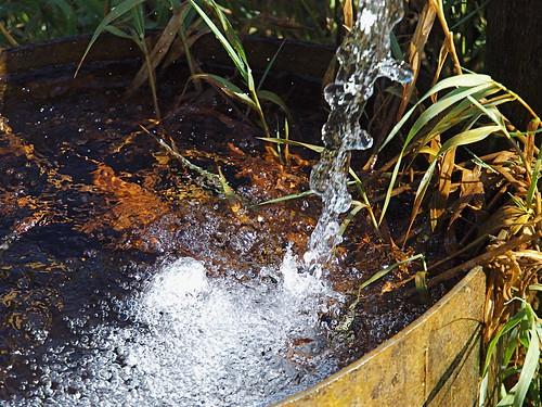 Artesian Springs on Rustic Road 84