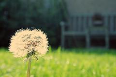 ... (Miss Kate Eliza) Tags: blue white green pretty bokeh blow wish