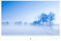 Seasons Greetings... (Gert van Duinen) Tags: blue white mist misty soft digitalart monotone delicate landschaft landschap christmascard subtle winterlandscape bluetones dutchartist icychill coolblues landschaftsaufnahme gertvanduinen coolbluewinterscene foggyatmosphere