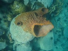 Chimney Sponge