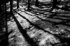 trees & shadows, © Monika Andrae