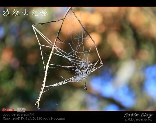 你拍攝的 20090110數位攝影_拉拉山外拍502.jpg。