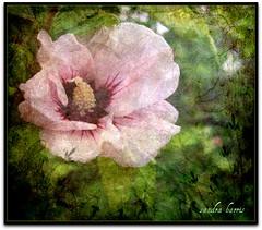 Fairie glen (sandra.harris10) Tags: fab soe fineartphotos anawesomeshot ourmasterpieces goldenheartaward artistictreasurechest