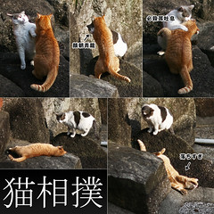 (yugoroyd) Tags: cats cute japan photoshop japanese funny play lol kanji animation  straycat flamework quarrel   sumou frisks catmoments
