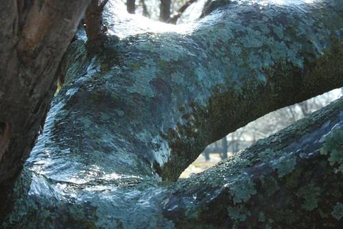 Frostbite Tree