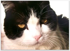 Pukis (Simply Viola) Tags: cats gatti