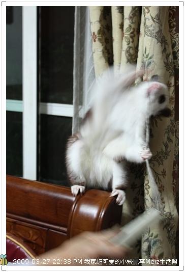 09年二三月小飛鼠Meiz生活照 (32)