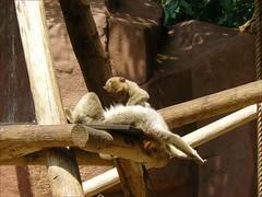 Rhenen-19 (jolingkoos) Tags: familie rhenen dierentuin ouwehand