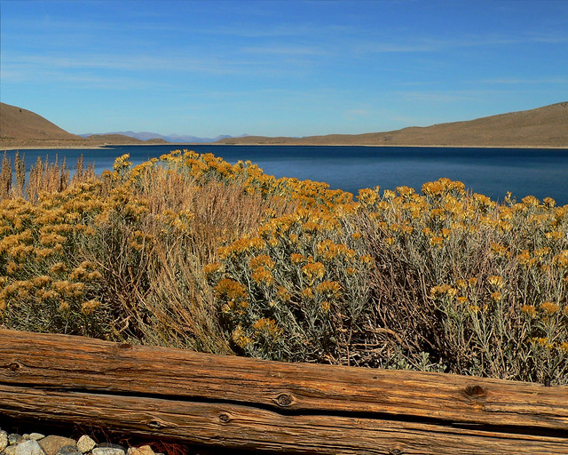 Rabbit Brush Lake