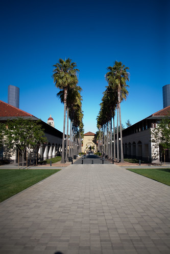 Stanford Palm trees