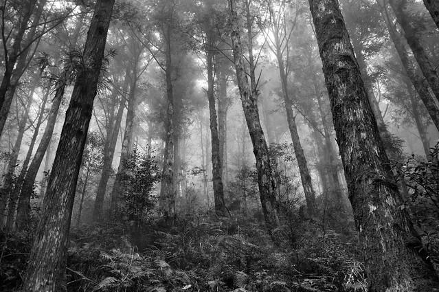 _IGP5274(太平山森林-黑白)