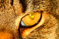 Cat Eye (My Fee) Tags: eye cat auge pupille