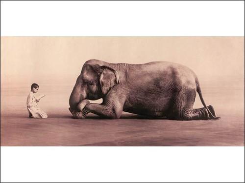 Elefantea eta umea