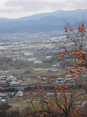 In Takoshima in Japan (Shaima82_4) Tags: trees houses mountains fruits japan ship land nippon 20 maru swy swy20 takoshima