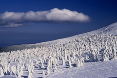 Jyuhyo 12 (Sky-Genta) Tags: winter snow tree ice monster japan tohoku yamagata zao    jyuhyou