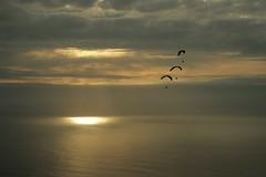 Sunglading (Svedek) Tags: sunset sea sky cloud reflection portugal three madeira aplusphoto ilustrarportugal srieouro