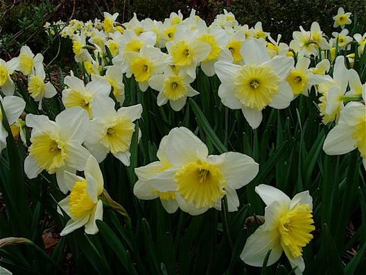 Carroll Park Spring