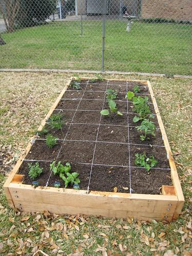 Filling The Raised Vegetable Garden Bed