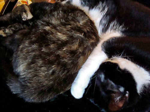 Yin-Yang Kitties