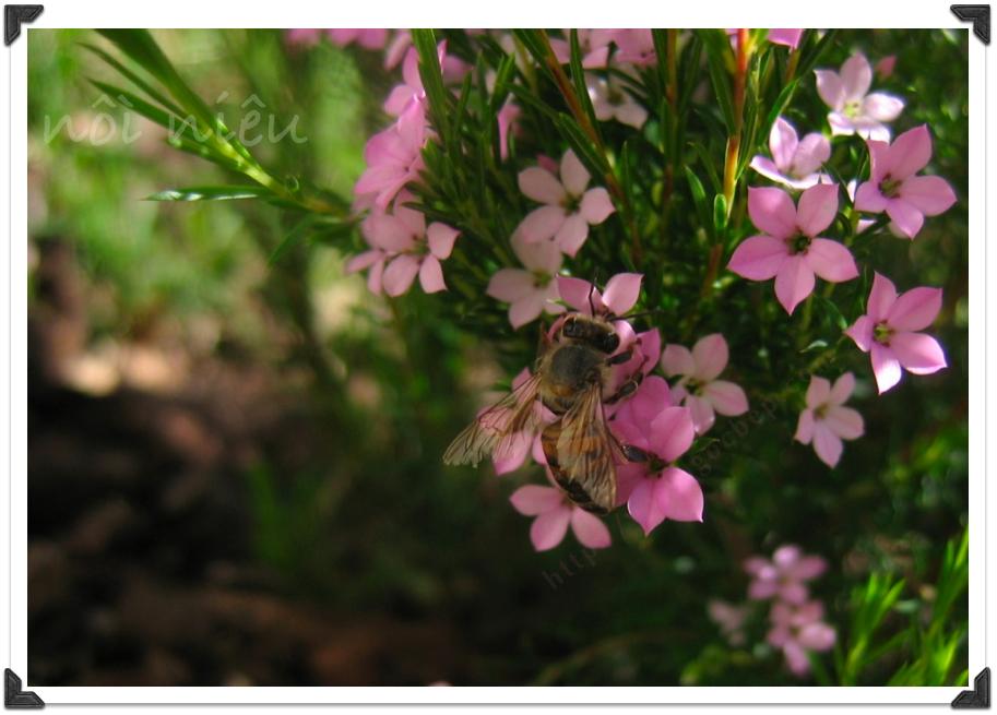 ong và hoa