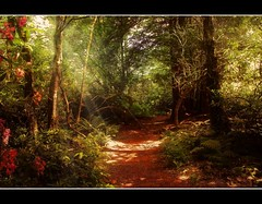 Enchanted forest (Steel Steve) Tags: light forest bravo shropshire path davinci themoulinrouge goldenglobe blueribbonwinner firstquality littlestories supershot flickrsbest mywinners abigfave artlibre anawesomeshot superaplus aplusphoto flickrplatinum infinestyle goldenphotographer superhearts platinumheartaward betterthangood thegardenofzen thegoldendreams goldstaraward picswithsoul ilovemypics multimegashot qualitypixels damniwishidtakenthat magicdonkeysbest vanagram photoexel obq