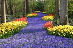 Keukenhof, Lisse, Netherlands (sjameron) Tags: holland netherlands topv2222 spring tulips topv1111 topv999 keukenhof lisse