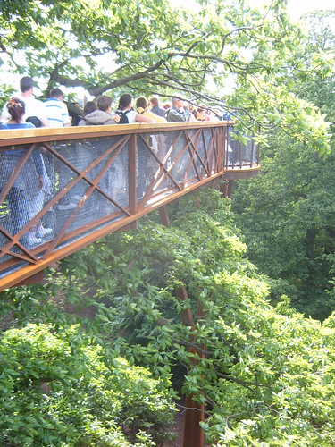 Walking through Trees at Treetop Walkway Kew Gardens