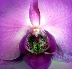 Special memory (Sue323 :-)) Tags: orchid flower macro canon purple maria violet images memory sue laakso kukka mywinners canonpowershota710is marialaakso sue323