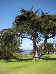Berwick Park (alliecreative) Tags: pacificgrove berwickpark
