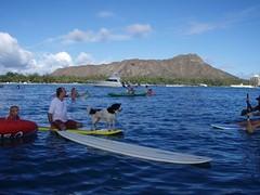 P7040017 (d.p.w) Tags: hawaii flotilla