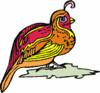 quail (3doel82) Tags: fish bird animals insect gambar koleksi ikan belajar burung binatang carnivora serangga mamalia amphibi