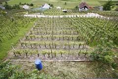 20080525_1876 (Borut Peterlin) Tags: vineyard vikend vikendica zidanica straza