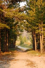 20080624_Yosemite_0844 (mostlygardening) Tags: yosemite tuolumnemeadows