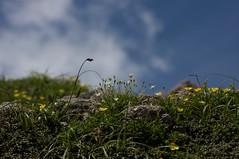 雲と青空とお花