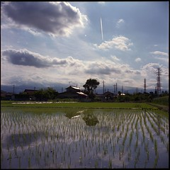 rice field (minolta AUTOCORD) (potopoto53age) Tags: cloud reflection film water japan rice minolta fujifilm realaace ricefield reala yamanashi paddyfield chiyoko kofu vaportrail 75mm millor autocord rokkor minoltaautocord mywinners aplusphoto ageinstthesun diamondclassphotographer flickrdiamond betterthangood theperfectphotographer goldstaraward flickrestrellas chiyokorokkor75mmf35