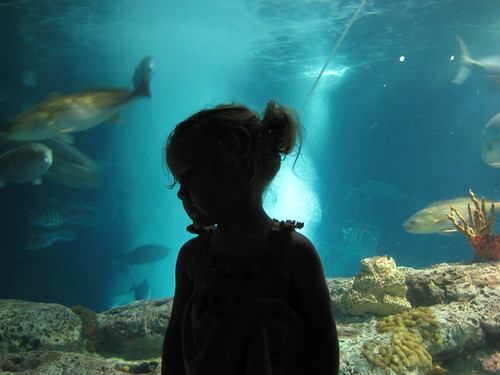 south carolina aquarium, 2008