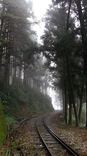 24.樹林間的阿里山鐵路