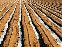 Irrigated (kevin dooley) Tags: morning arizona favorite southwest water beautiful field lines wow point early interesting fantastic flickr pretty ditch desert very good farm gorgeous awesome award superior super best explore most winner stunning excellent much plow soybean parallel vanishing incredible breathtaking irrigation exciting trough waddell phenomenal converging mcmicken