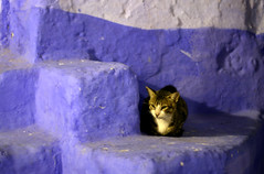 Kit (Daniel Moreira) Tags: night stairs cat daniel morocco gato noite chefchaouen marrocos escadas moreira ysplix