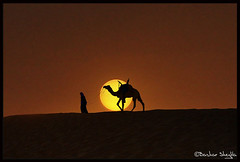 Tuareg & Camel, Libya ! (Bashar Shglila) Tags: world africa sunset sun sahara photography amazing photographer desert photos top photographers best camel photograph worlds  libya camels camello bashar  lybia touareg tuareg  libyan ghadames libia libye   camellos libyen    lbia   libi libiya   liviya ghadamis  libija     bentaher    sheglila     lbija  lby libja lbya liiba livi
