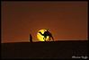 Tuareg & Camel, Libya ! (Bashar Shglila) Tags: world africa sunset sun sahara photography amazing photographer desert photos top photographers best camel photograph worlds شمس libya camels camello bashar من lybia touareg tuareg صور libyan ghadames libia libye غروب جمال camellos libyen صحراء الشمس ليبيا líbia جمل ابل libië libiya بشار الليبية liviya ghadamis الجماهيرية libija ليبية غدامس طوارق ليبي bentaher либия توارق شقليلة sheglila ливия تارقي լիբիա ลิเบีย lībija либија lìbǐyà libja líbya liibüa livýi λιβύη ايموهاغ هقار