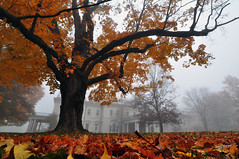 Blithewood Mansion (Nick Scribner) Tags: autumn orange newyork tree leaves fog nikon nikkor 2008 bardcollege d90 1224mmf4 explore7 blithewoodmansion