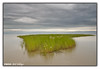 Grassland in Brahmputra (Arif Siddiqui) Tags: india nature landscapes rivers assam northeast soe arunachal 5photosaday brahmputra arifsiddiqui boatscenic