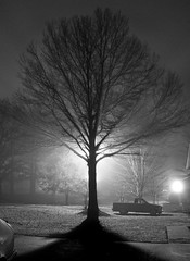 Tree (chesshoyle) Tags: light bw mist tree fog night blackwhite nikon 18200 d80 stunningnikongallery