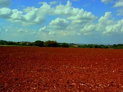 This Land is My Land (tipiro) Tags: sky nature cu land terra plantao naturesfinest coth supershot paisajesdepueblosycampos