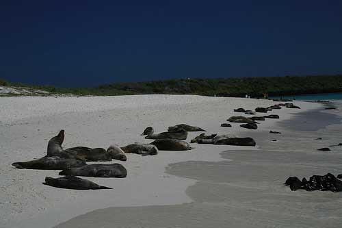 Ecuador Galapagos