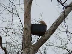 GHOW nest empty