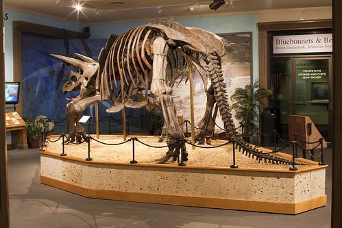 Witte Museum, San Antonio, Texas, 2008