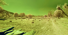 Farm Field Panorama In Rajasthan (aeschylus18917) Tags: danielruyle nikon d70 aeschylus18917 danruyle druyle infrared 赤外線 ir landscape scenery surreal nikond70 japan tokyo sky tree ダニエルルール ダニエル ルール infra red edit 日本 panorama udaipur field agriculture india rajasthan countryside farm nature wheat harvest 1870mm 1870f3545g nikkor1870f3545g nikkor1870f3545gdx nikkor 1870 f3545g pxi pxt