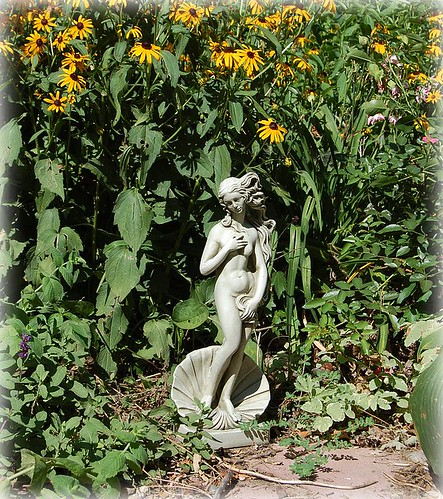 venus in my garden